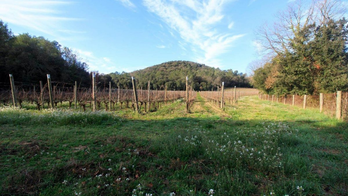Eccocivi, vi, wine, visita guidada pel volcà Montrodo i celler Eccocivi